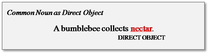 common noun direct object